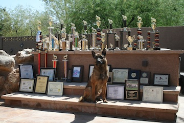 executive protection dogs, police dogs, family protection dogs, highest level, elite